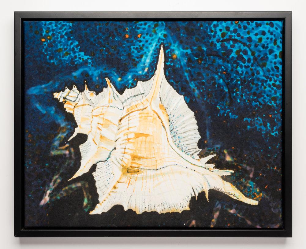 """White Shell 2014, 21.5"""" X 17.5"""" $525"""