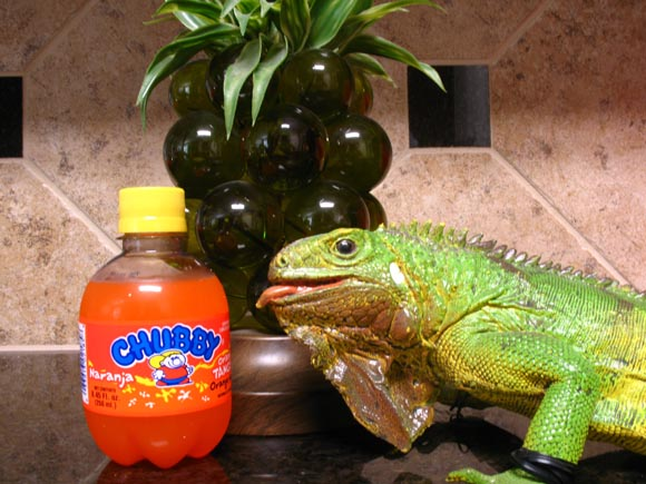 Chubby Orango Tango580.jpg