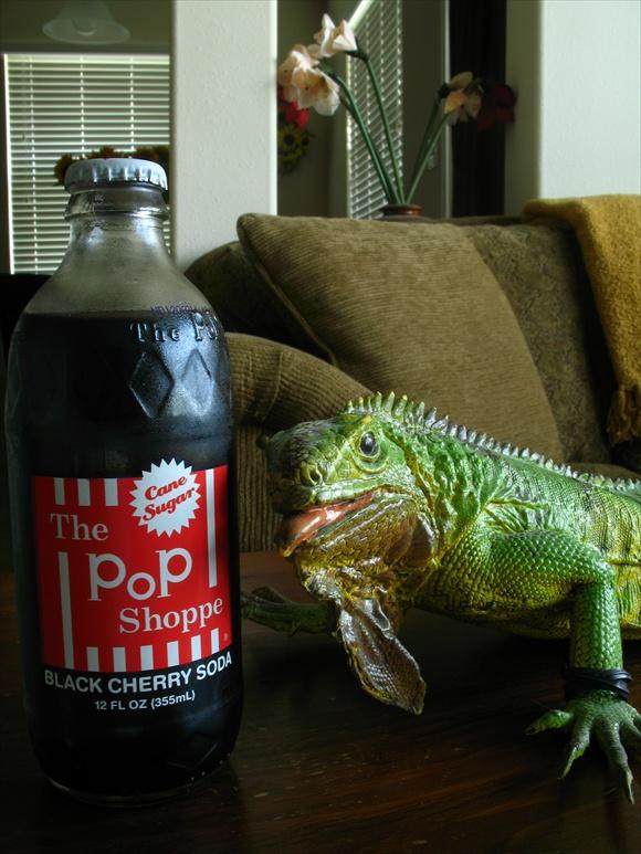 The Pop Shoppe Black Cherry Soda580.JPG