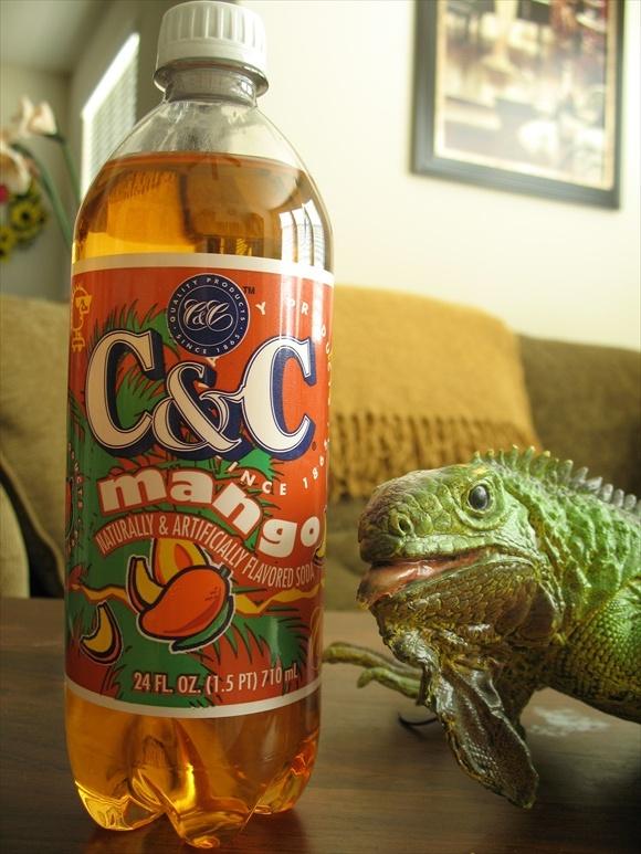C&C Mango580.jpg