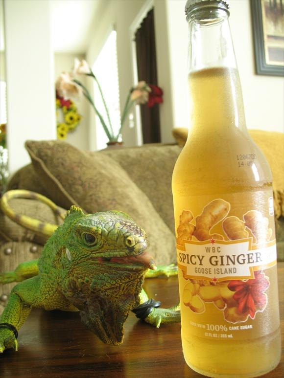 Goose Island Spicy Ginger580.JPG