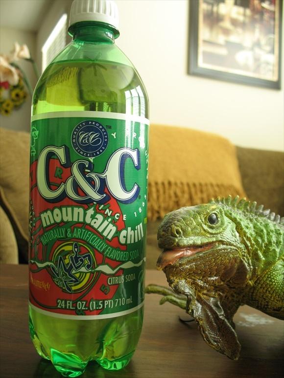C&C Mountain Chill580.jpg