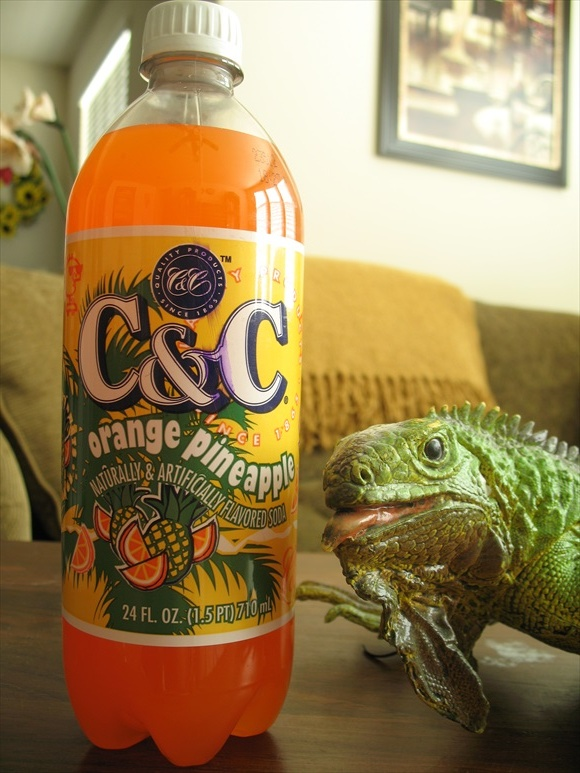 C&C Orange Pineapple580.jpg