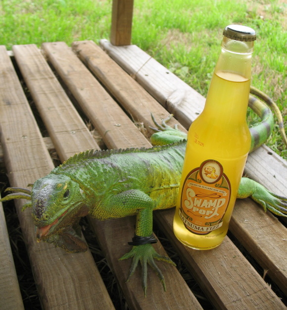 Satsuma Fizz was Twist's name when he was hustlin' pool.  If you were scammed by a Satsuma Fizz though it was probably a different iguana.
