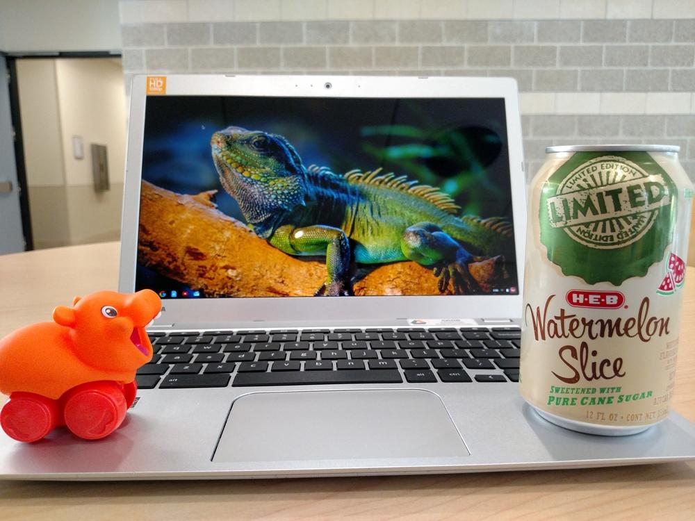 Hippos love watermelon.
