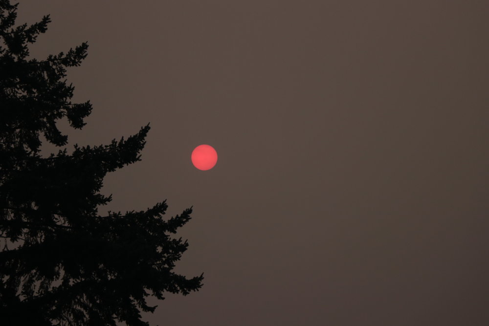 Canon EOS 80D Canon EF-S18-135mm f/3.5-5.6 IS USM ISO 400 135mm f/5.6 1/125  I darkened this one a bit in post to bring the color out. It was a beautiful red sun immersed in a grey sky.
