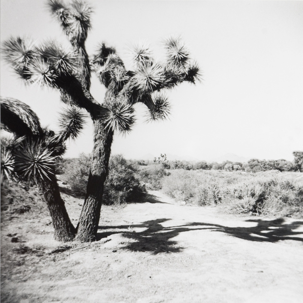 Untitled (Joshua Tree), 2008