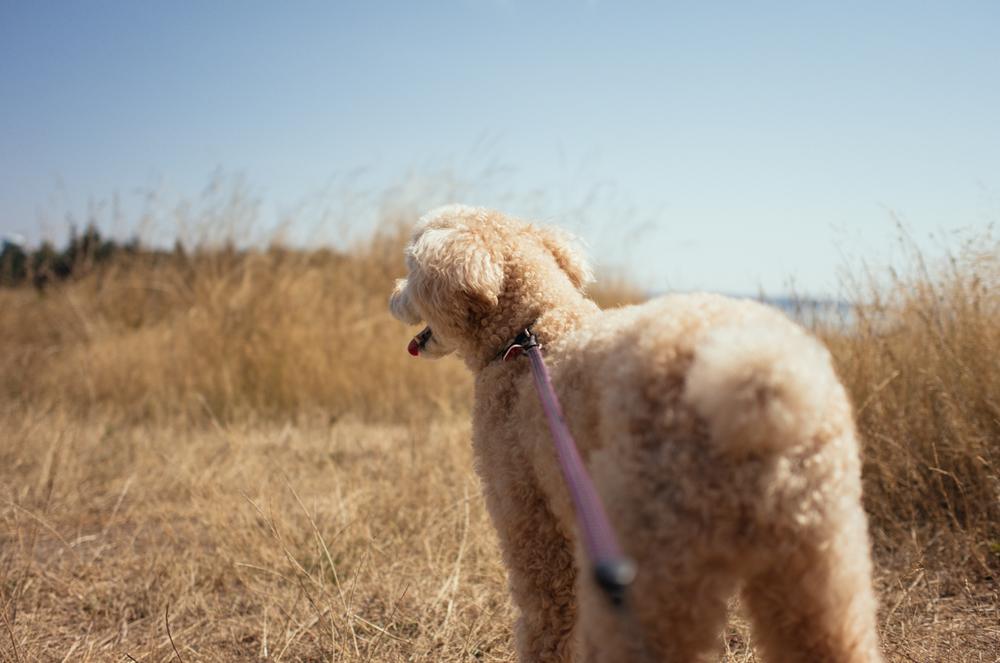 Leica T +SUMMICRON-T 1:2/23