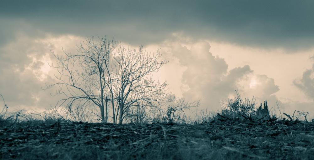 שקיעה חורפית ביערות הכרמל