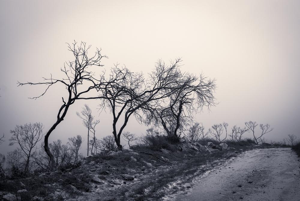 צילום טבע | איתי אבירן