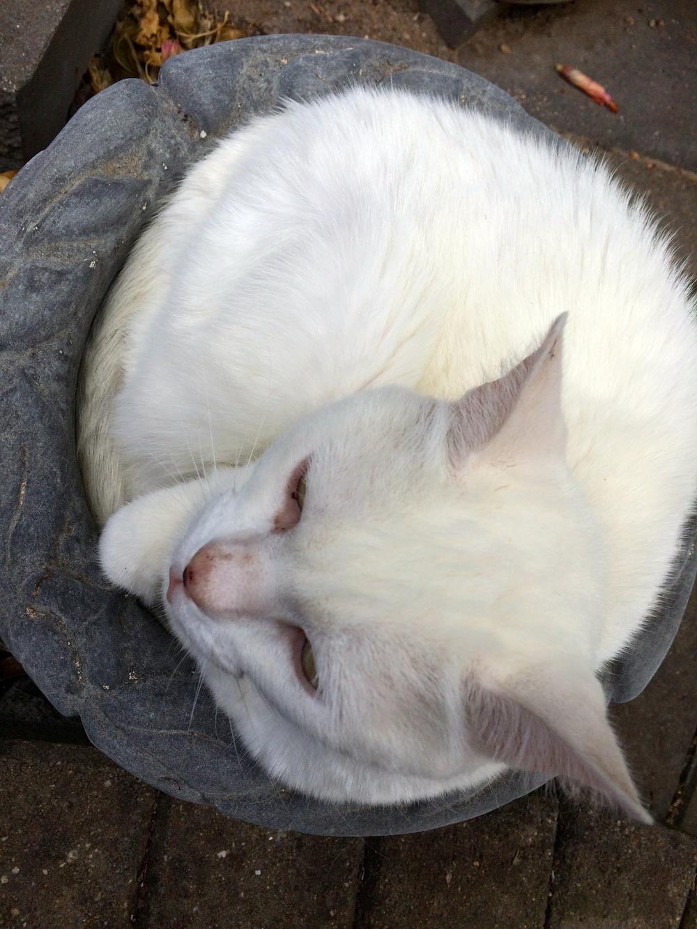 catdaysunday