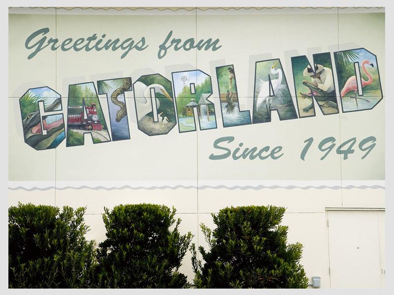 Gatorland Postcard