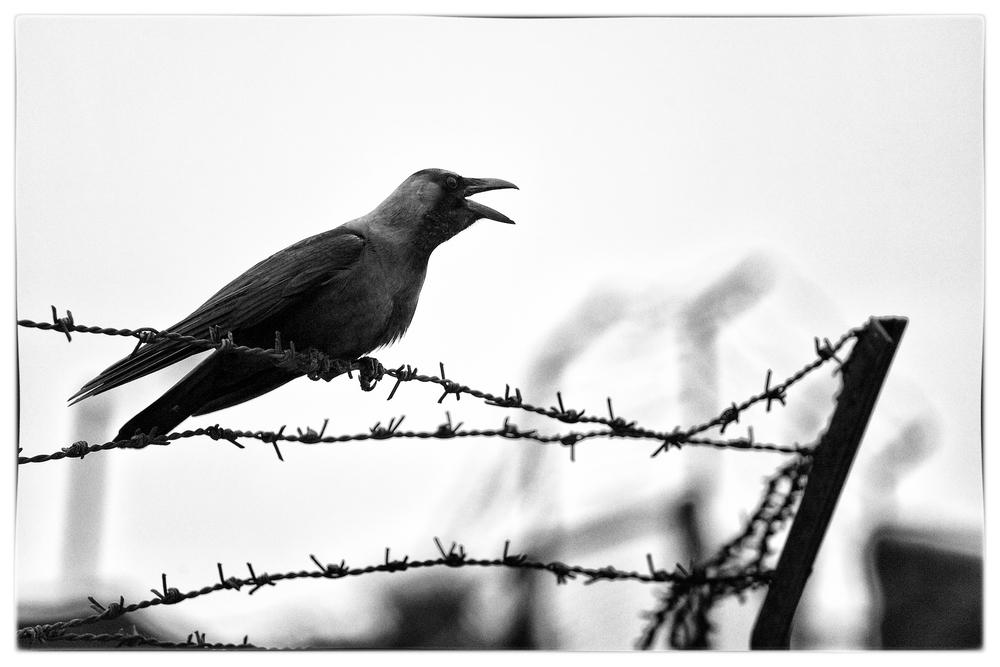 The 404 Crow