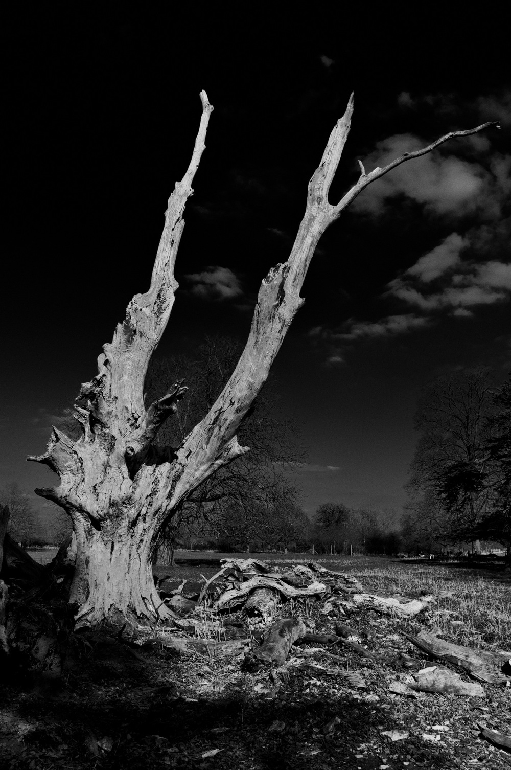 The Dead Tree Paul Evans
