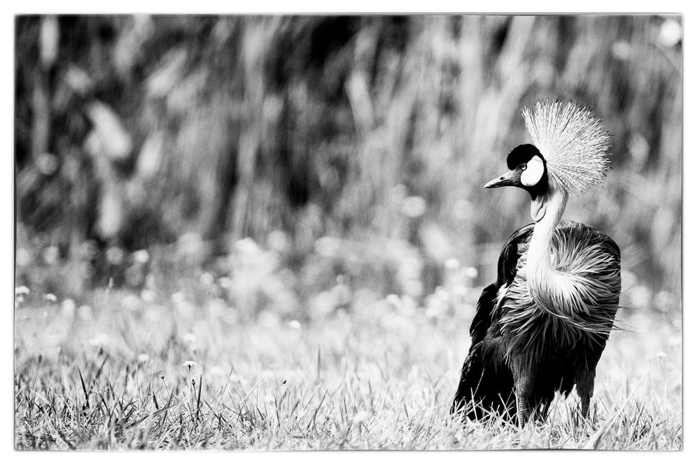 WildSafari_2012-08-08_11-35-46__JAL8864_©JosephLinaschke2012.tiff.jpg