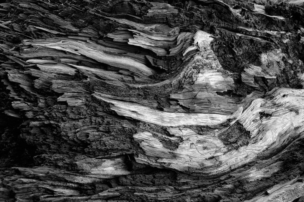 A very large piece of wood by Joseph Linaschke