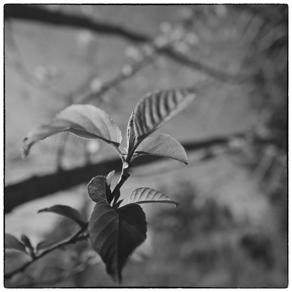Arbor Day by Paul Farinato