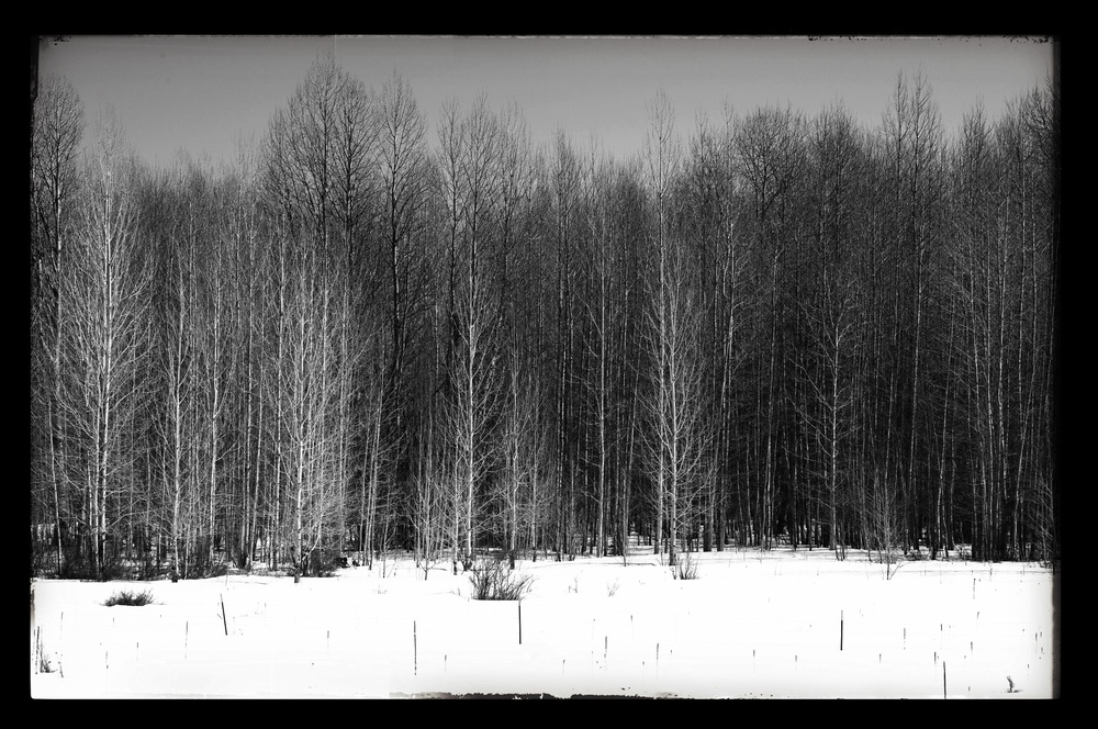 Barren Trees and Snow  by Joseph Linaschke