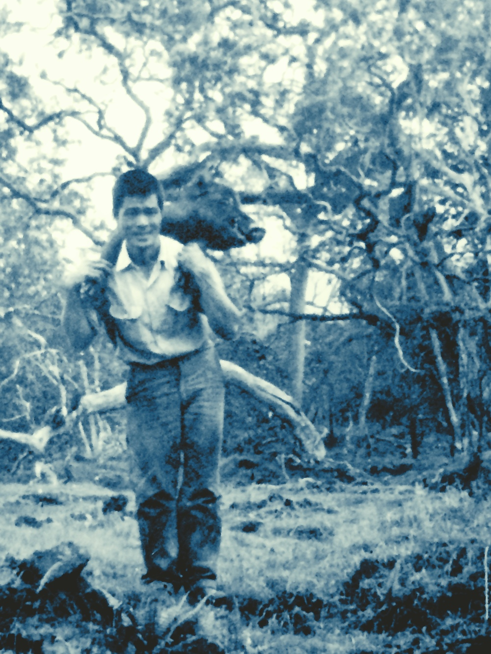 Fred Uechi, packing a wild boar out of a South Kona forest.