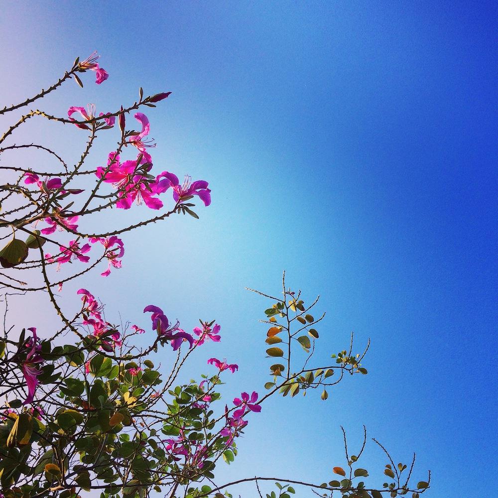 pink_flower_tree.jpg