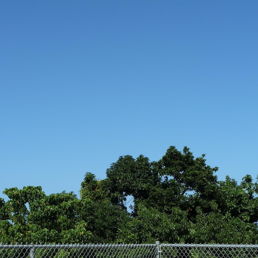 TreeFence.jpg