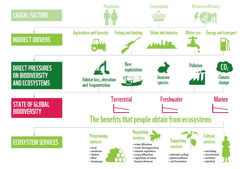 biodiversity-chart-WWF-LPR.jpg