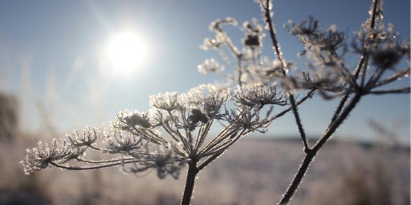 WinterSun.png