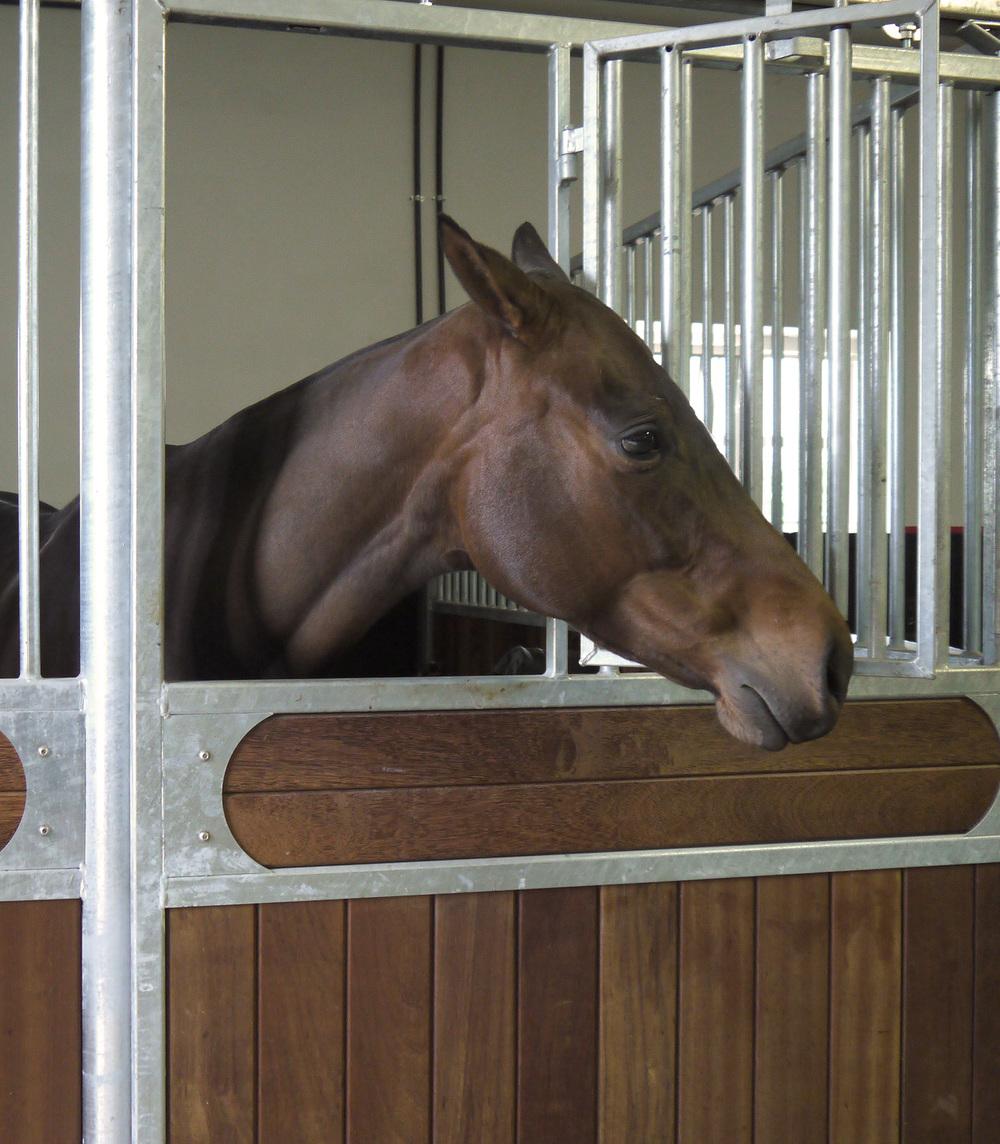 Horse Stable.jpg