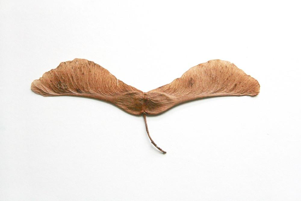 Mariposa. Butterfly.