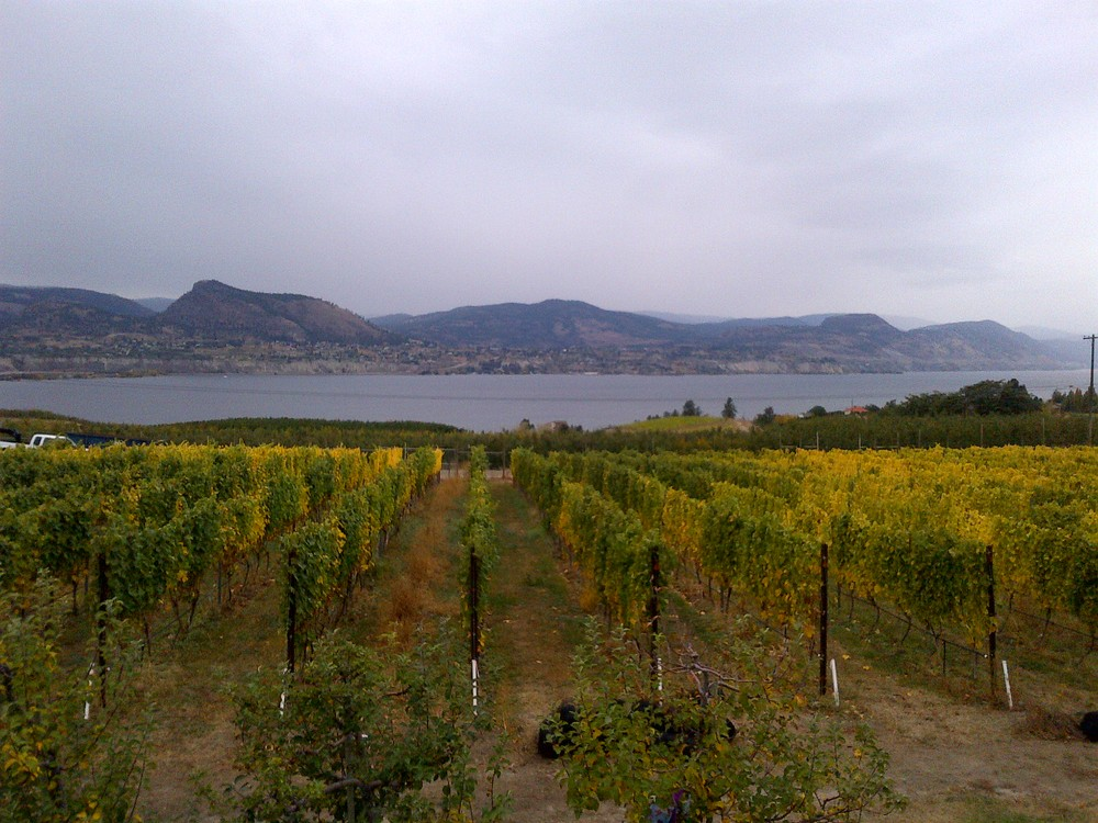 Overcast morning view of Joie's vineyard over lake Okanagan