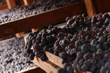Grapes drying for the Amarone.