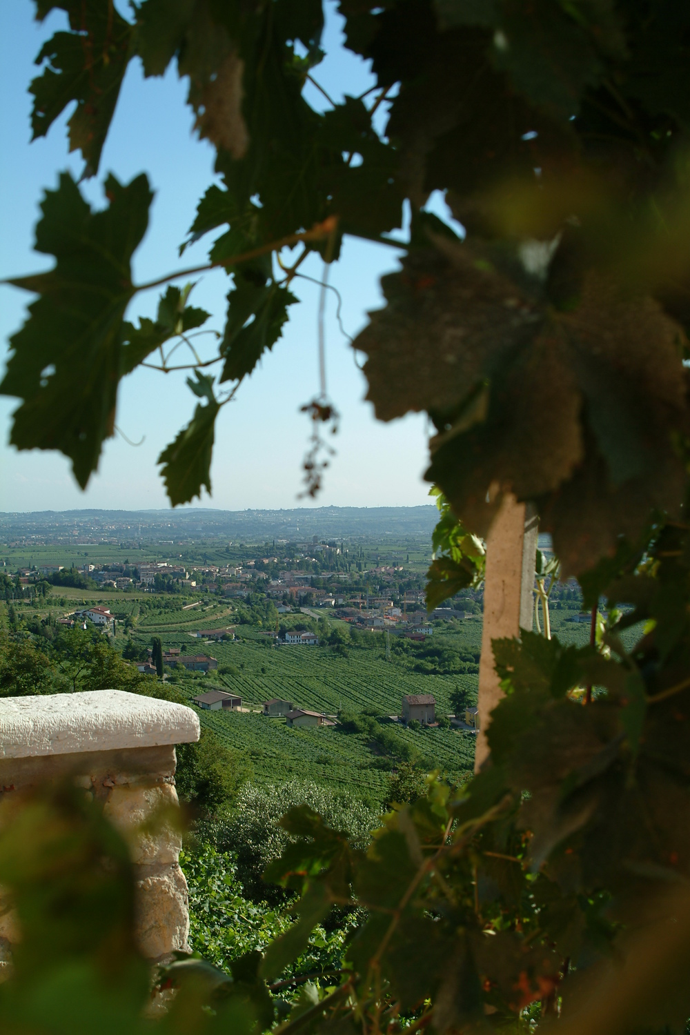 View from the top of Sant Urban vineyard where Speri's Amarone comes from.