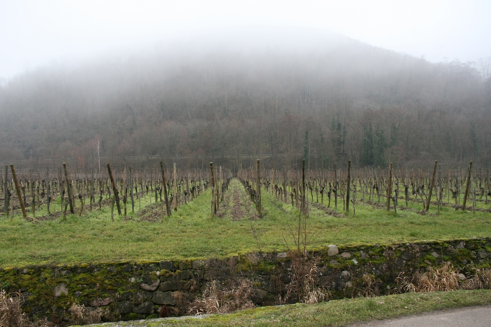 Clos des Capucins vineyard.