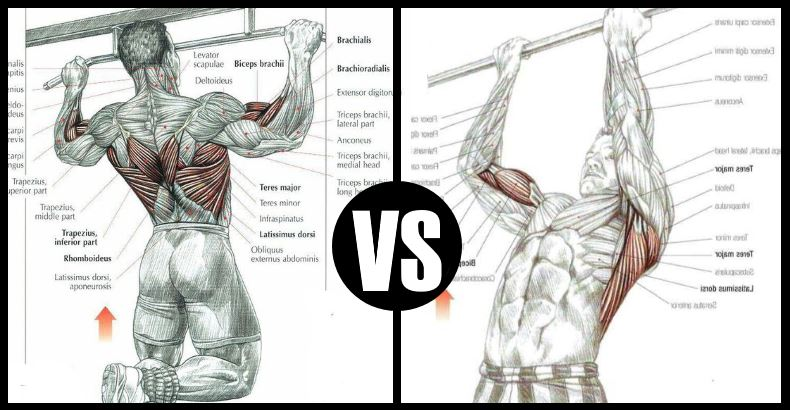 Chin-up-vs-Pull-Up.jpg