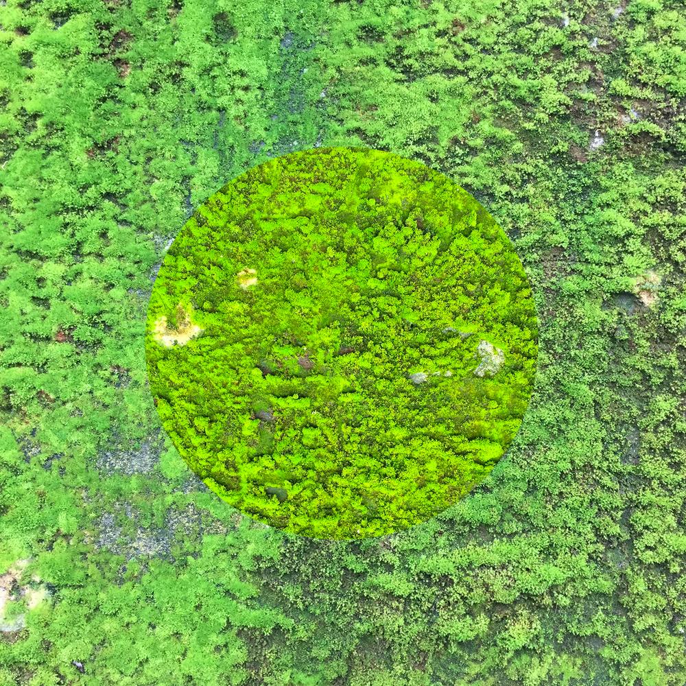 Vert-01.jpg