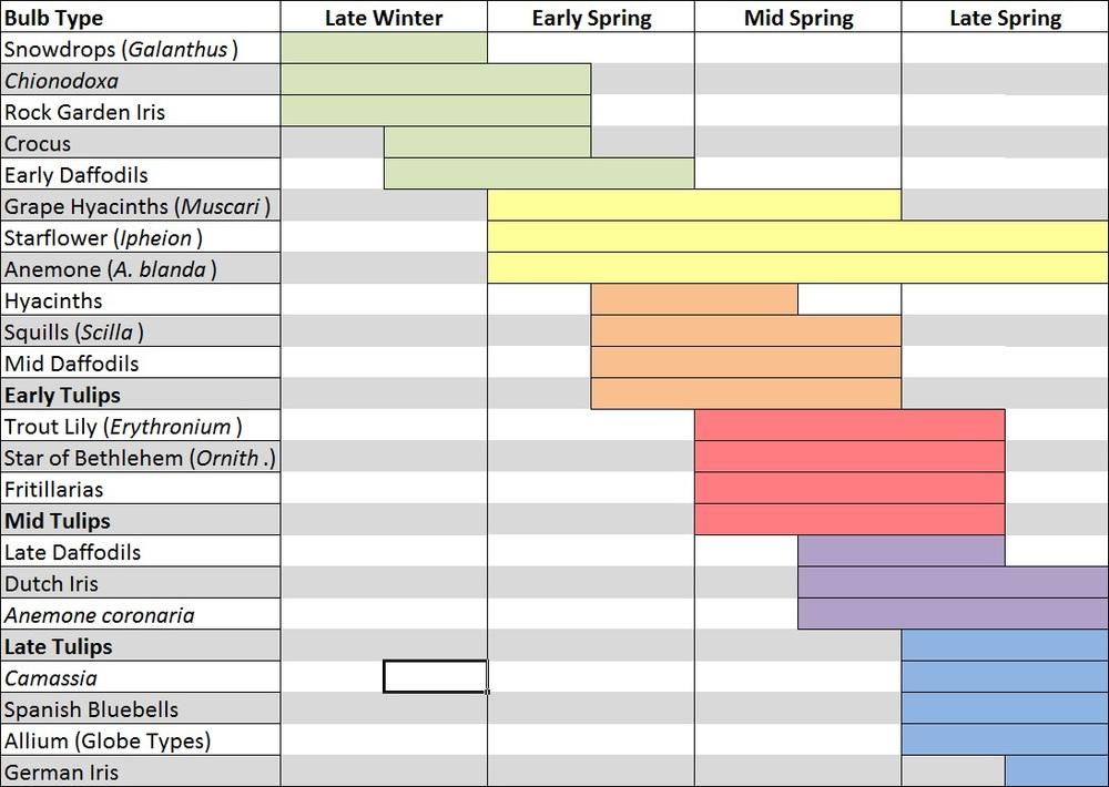 bulb bloom chart.jpg