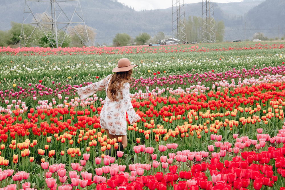 The Abbostford Tulip Festival ~ Photo:  Bailey Marshall