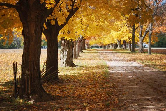 fall drive_web.jpg
