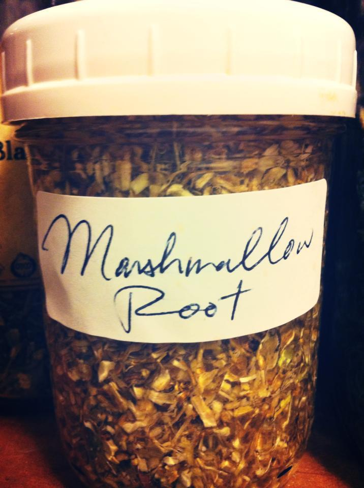 Marshmallow Root Tincture