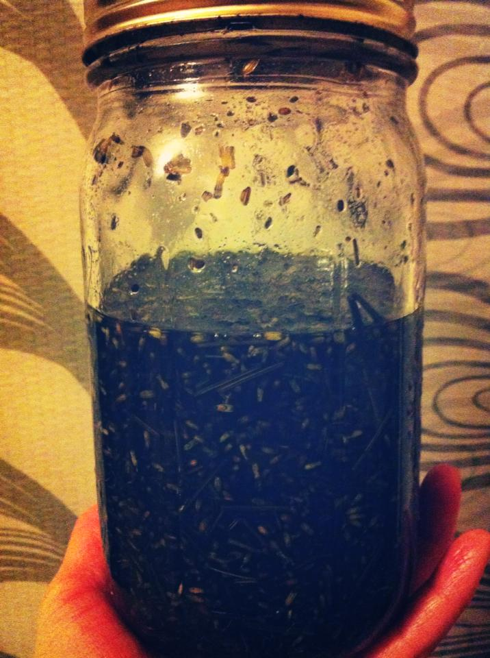 Lavender that's been infused in coconut oil for 6 months!
