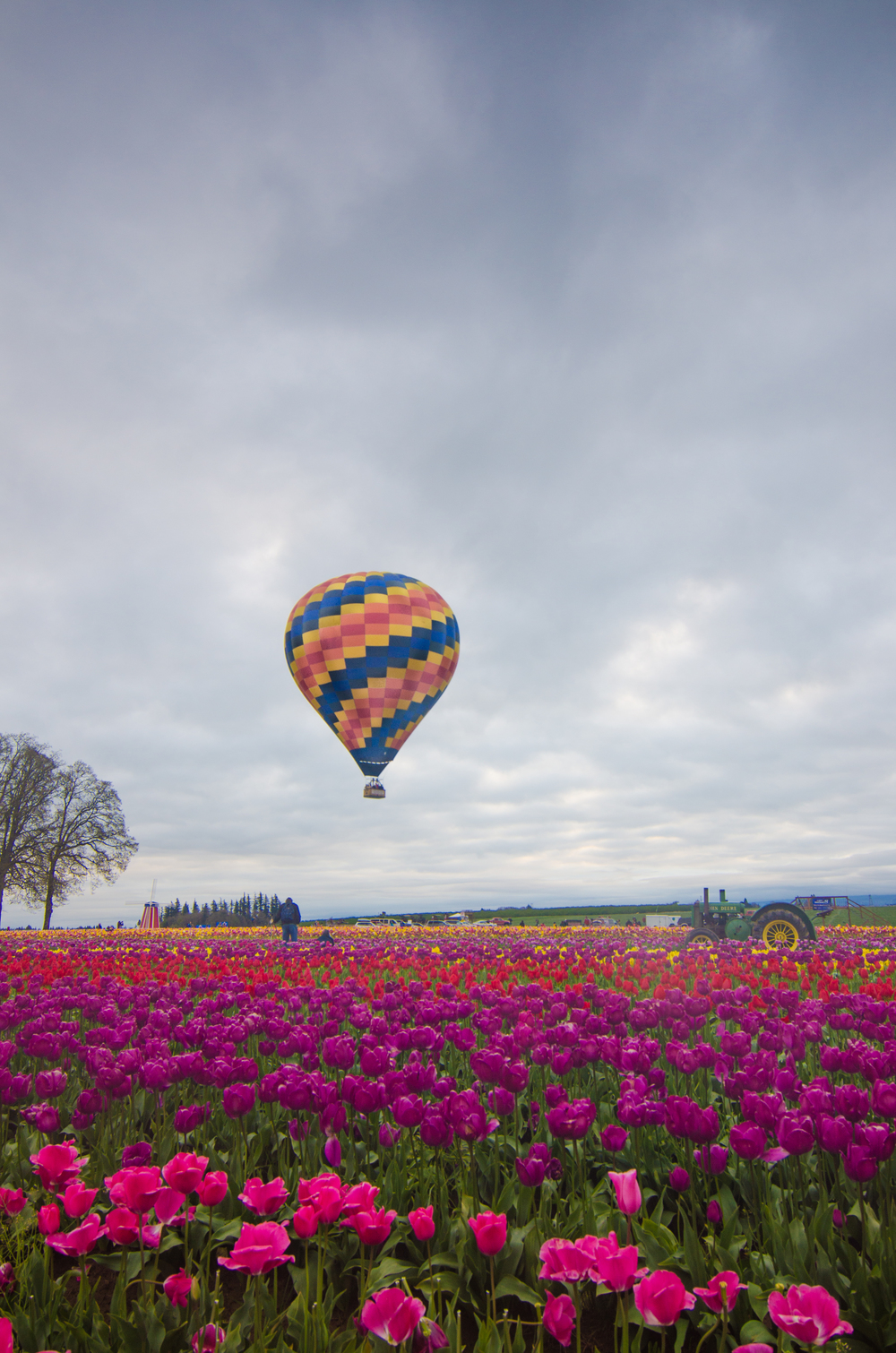 The first and only Hot Air Balloon that successfully launched from the tulip farm.