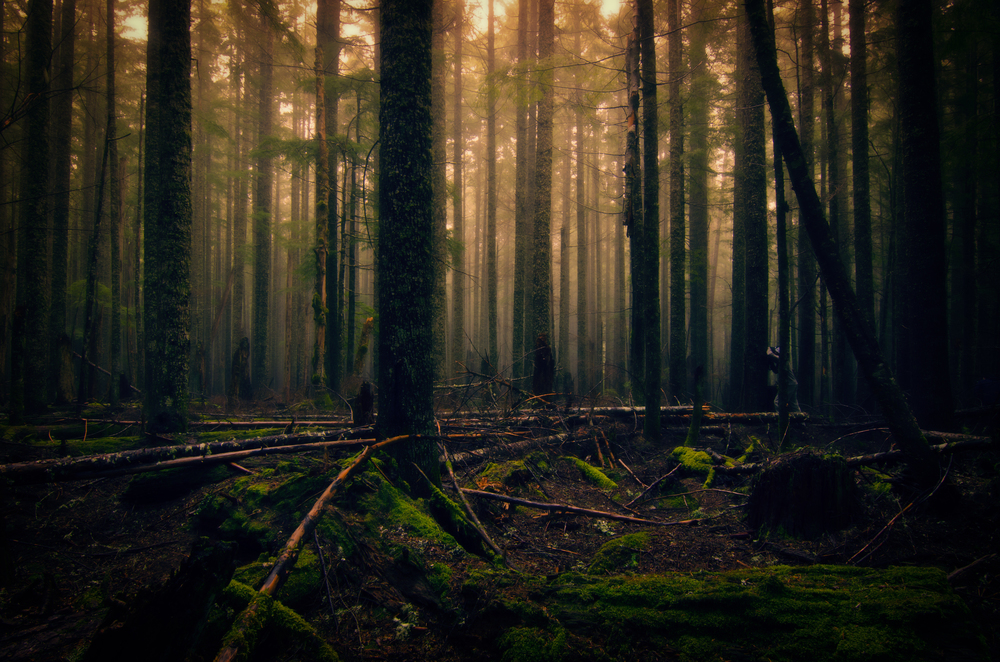 Fog in the forest creating an eerie but beautiful feeling and that's what I wanted to create with this image.