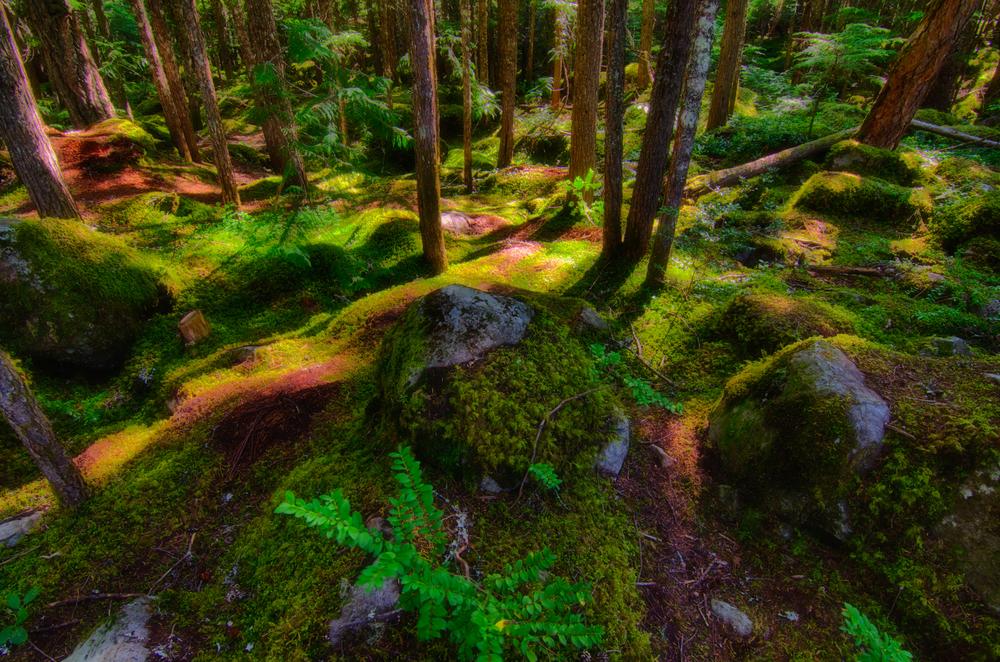 Whistler Waterfalls-8.jpg