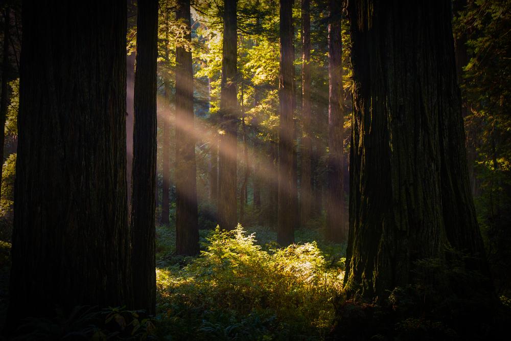 Southern Oregon-16.jpg