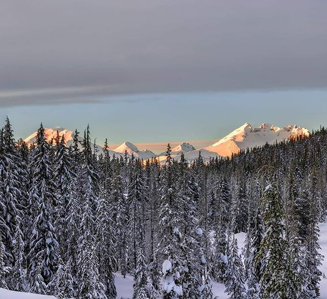 A beautiful view of a few central Oregon peaks during a snowshoe tour with @wanderlusttours  Cresting our own tracks through perfect untouched snow and Forrest was amazing. The light on the mountains was just spectacular as well.