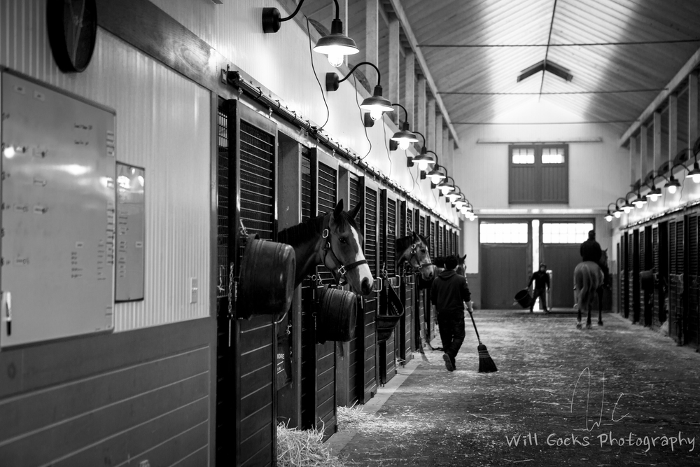 Curious horses in the Racing Stable