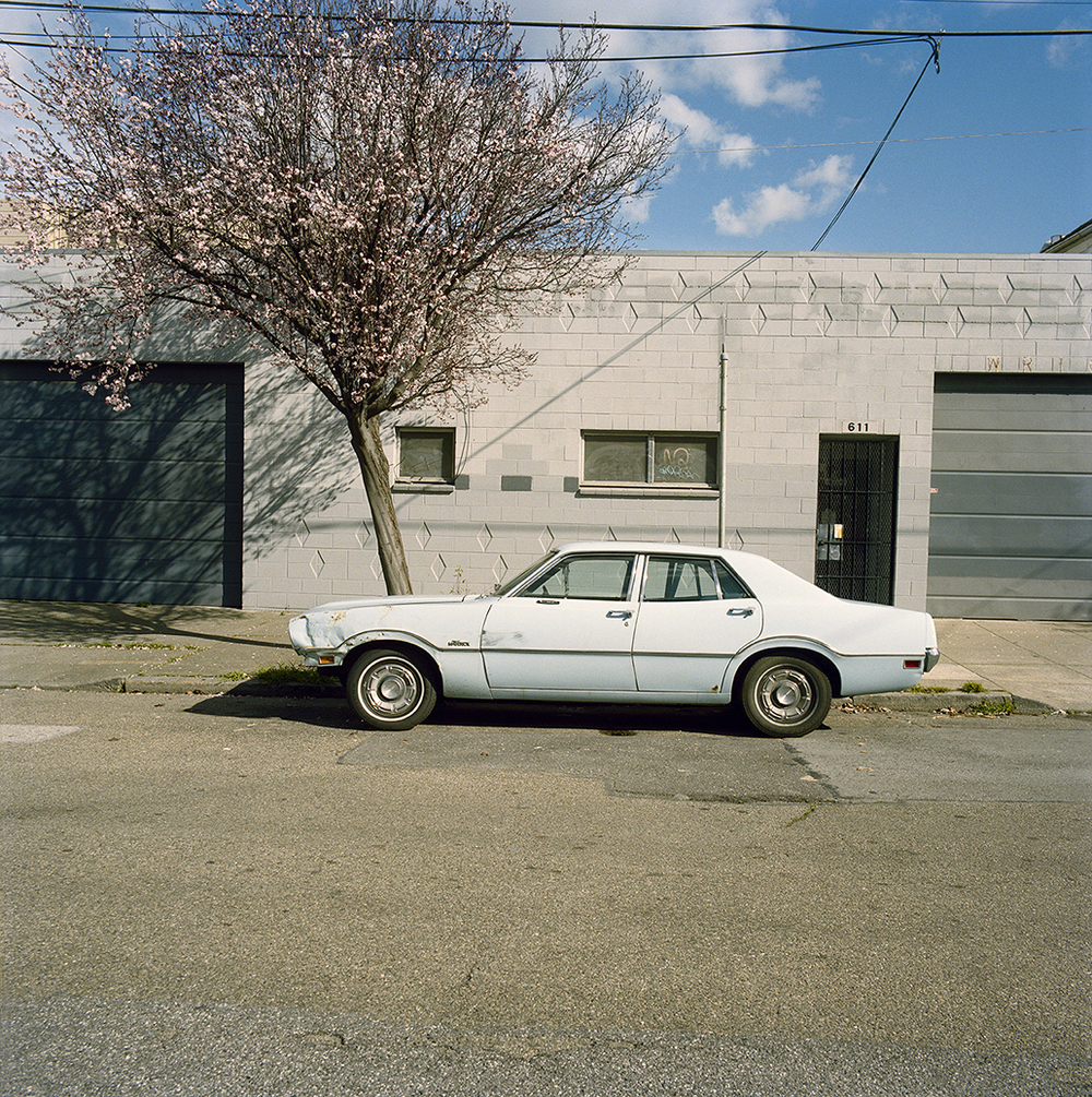 Maverick with Cherry Blossom,  2010  Chromogenic Print 25 x 25 in Edition of 10