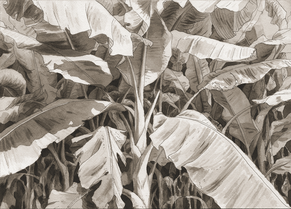 Close Enough for the Angels, Pai, Banana Tree  , 2010-2016 10 x 14 inches Pen and ink on watercolor paper
