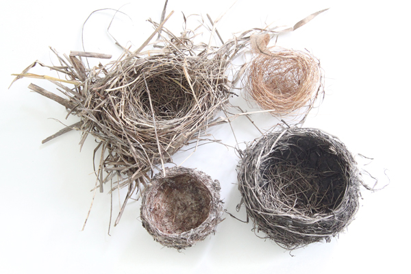 bird nests copyshop.jpg