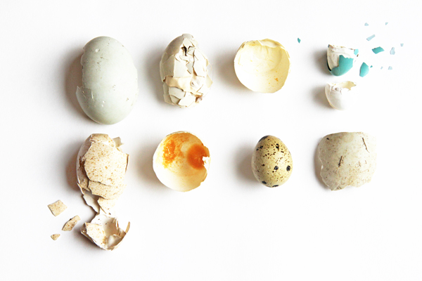 egg shells copyshop.jpg